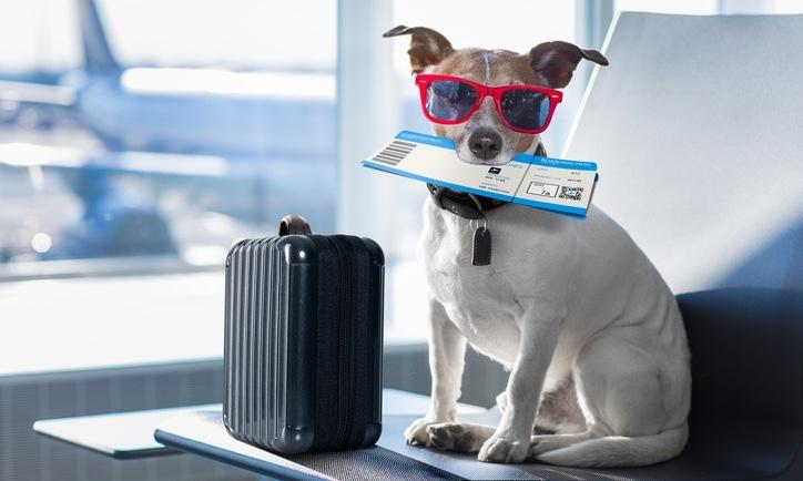 Traveling_Dog_securitypagejpg